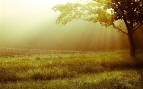 Nature Landscape Tree Tree Leaves Leaves Leaves Tree Trees Light And Landscape