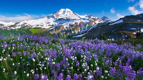 mountains flowers landscape wallpapers hd desktop