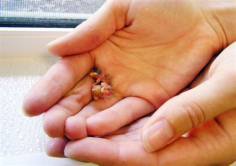 what is the smallest in the world the smallest baby in the world www imgkid the image kid has it
