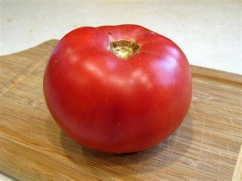 tomato pink lady seeds garden hoard certified