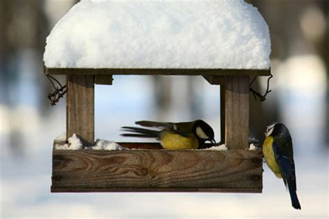 backyard bird feeding tips feeding birds in winter diy true value projects