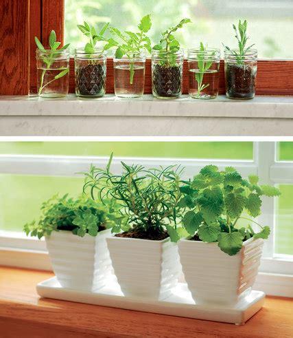 urban farming  countertop  table nytimescom