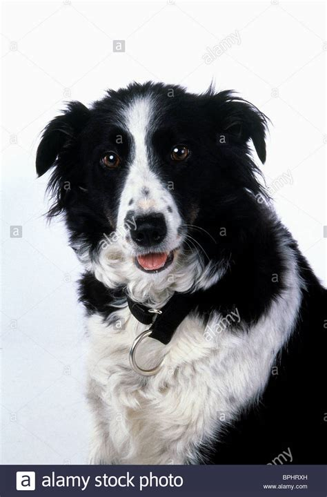 from snow dogs nana the snow dogs 2002 stock photo royalty free image 31124761 alamy