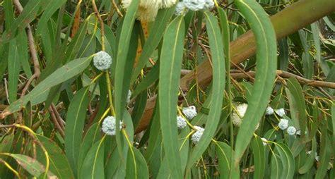 piante antizanzare da giardino piante anti zanzara piante da giardino piante