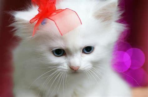 Imagenes De Gatitos Blancas Tiernas | buenas gatitas im 225 genes taringa