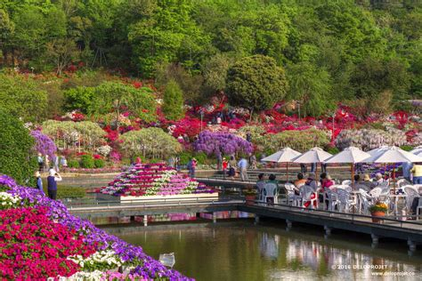 travelling with me ashikaga flower park japan deloprojet ashikaga flower park the best spot for wisteria