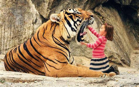 wallpaper tumblr tiger tiger pictures wallpapers wallpaper cave