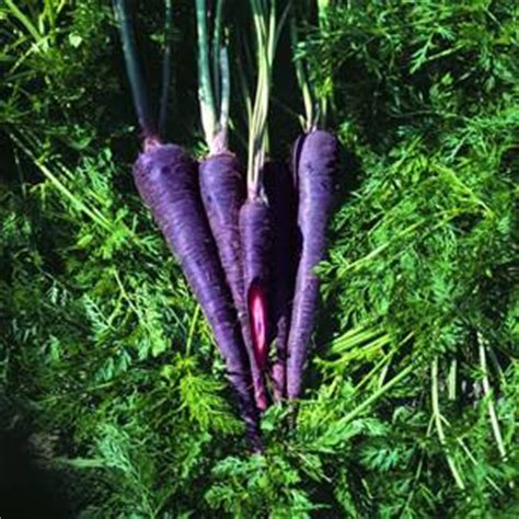 the carrot purple and other curious stories of the food we eat rowman littlefield studies in food and gastronomy books curious purple carrots