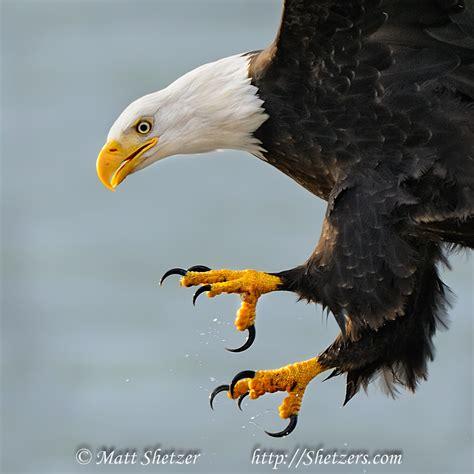 Eagle Information