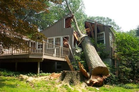 tree fell on house big tree fell down on a house 3 photos izismile com
