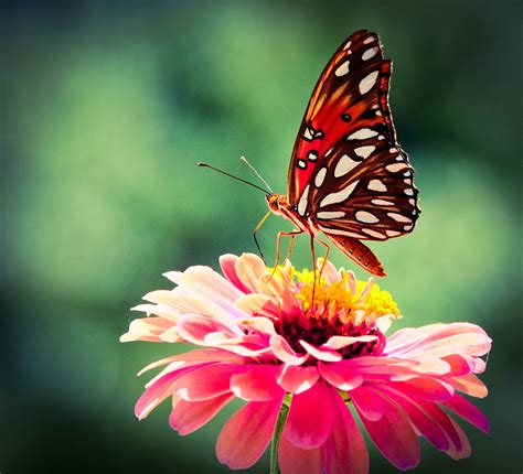 and butterfly vibrance birds and butterflies a z