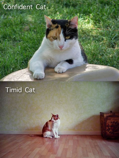 how to a timid to come should i adopt a bold or timid shelter cat