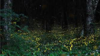 The Words To Blinded By The Light Lisa S World Fireflies