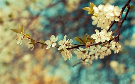 www housebeautiful customer service 60 best spring spring wallpapers hd free download 60 page 3 of 3
