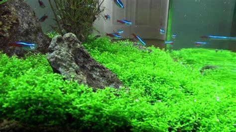 Best Low Light Aquarium Plants amazing planted nano aquarium 14 gal biocube youtube