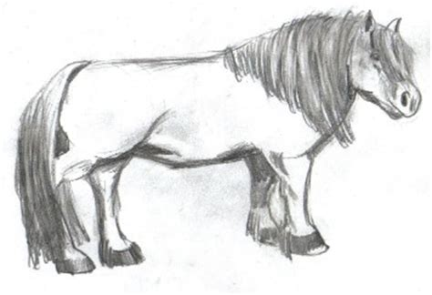 shetland pony coloring pages shetland colouring pages page 2