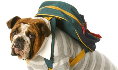 puppy school 7 ways to fight separation anxiety in pets back to school edition