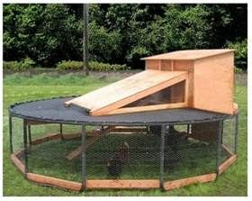 Mice In Rabbit Hutch Chicken Coop Projects