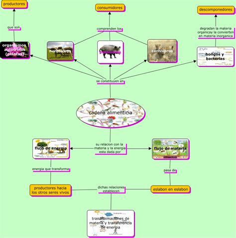 cadena alimenticia hongos y bacterias cadena alimenticia 2