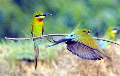 ranganathittu bird sanctuary speakzeasy