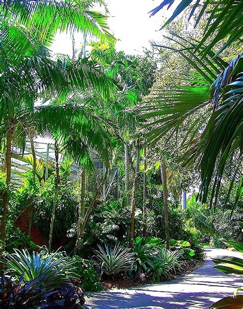 Fairchild Tropical Botanic Garden Miami Fl 17 Best Images About Trees Palms Pines Palmettos On Trees Coconut And De