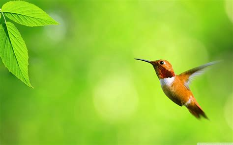 humming bird full hd wallpaper and background 2560x1600
