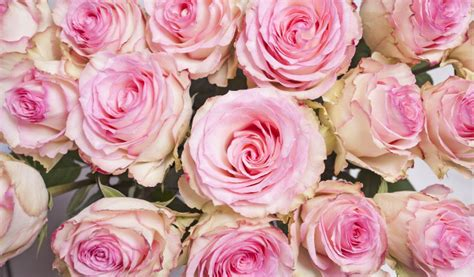 Oh So Pretty Of The Week Marc Gardenia Bottle by For Roses