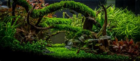 aquascape substrate planted tank enchanted forest by tommy vestlie aquarium