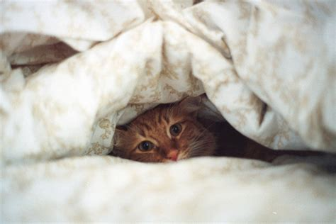 animal in bed adorable animal bed cat cute image 152426 on favim com