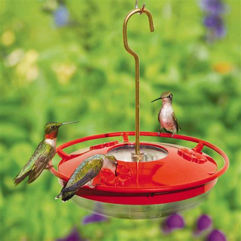 ruby throated hummingbirds on the wbu high perch