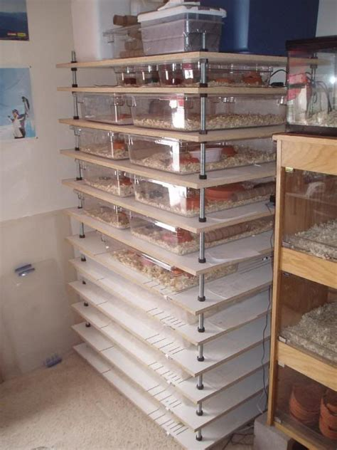 Diy Melamine Snake Rack by Adjustable Rack System Snakes