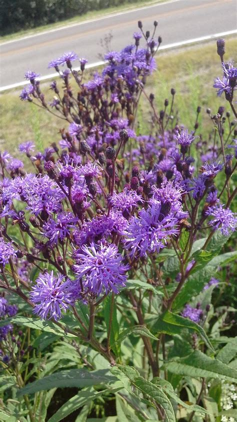 Plant Id Forum Purple Wild Flower Id Garden Org Purple Garden Flowers Identification
