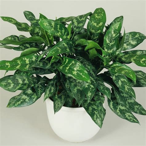 list   beautiful houseplants  clean air balayph