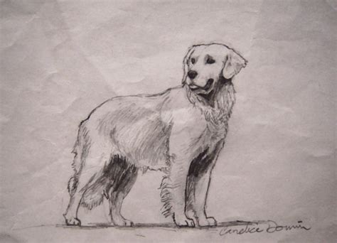 golden retriever sketch golden retriever sketch by jezarae on deviantart