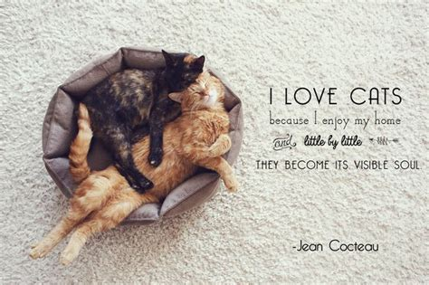 10 quotes about cats to make your purr mnn