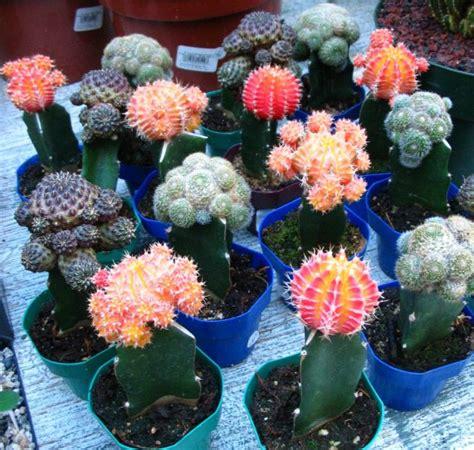 grafting botany and plant biology