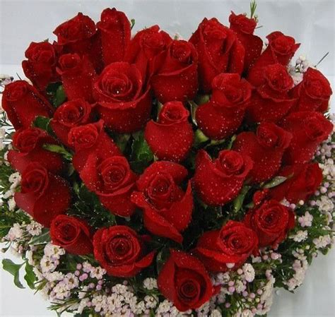 imagenes impresionantes de rosas fotos de rosas
