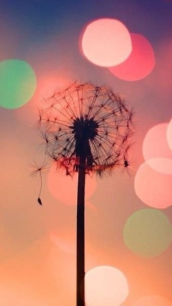Qw Wallpaper Dandelion Pink dandelion image 1800978 by taraa on favim