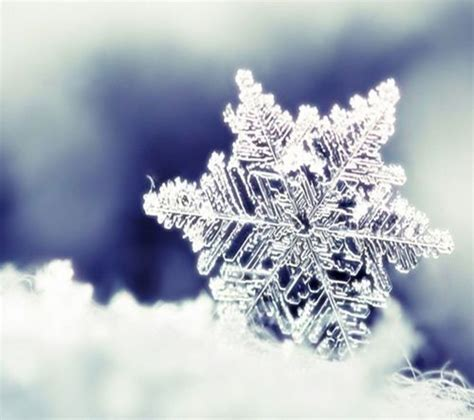 snowflakes nature and world on pinterest