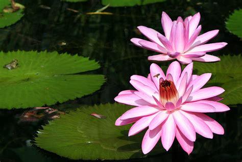 gambar mekar menanam daun bunga berkembang bunga