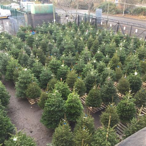 where can you buy a real christmas tree in and around