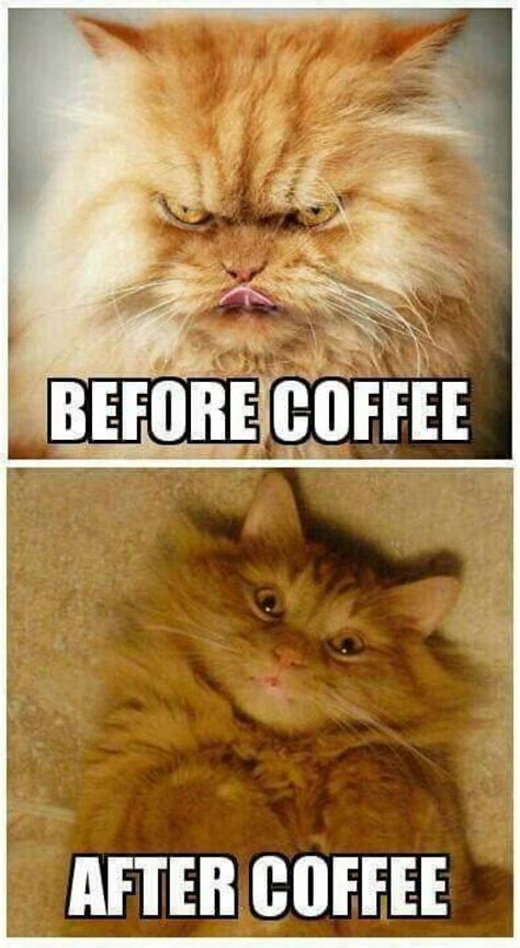 before vs after coffee cat meme meme collection