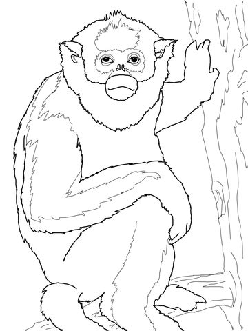 vervet monkey coloring page golden monkey coloring page free printable coloring pages