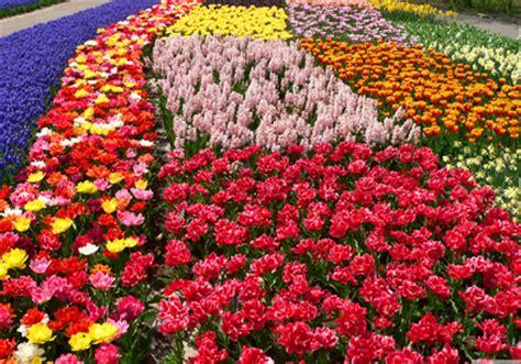 fiori liguria euroflora fiera florovivaistica a genova