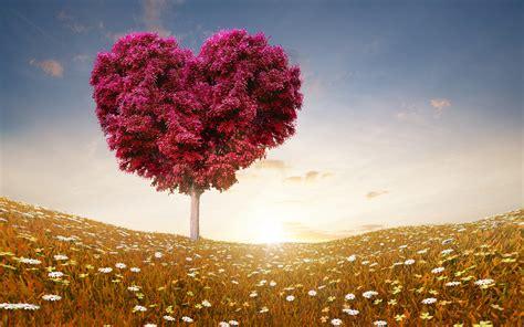 heart tree wallpaper gallery