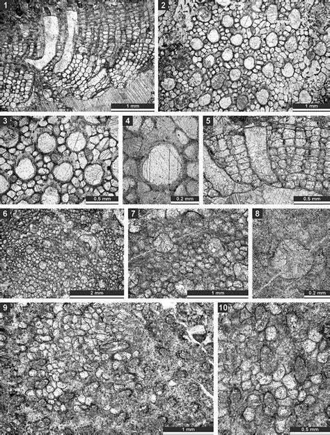 bryozoan thin section palaeontologia electronica