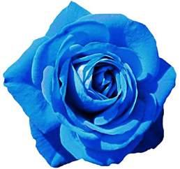 Flowers Shop Sky Blue Rose By Jeanicebartzen27 On Deviantart