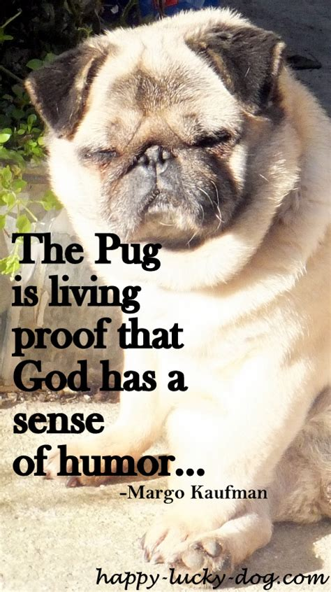 quotes about pugs pug quotes and sayings quotesgram
