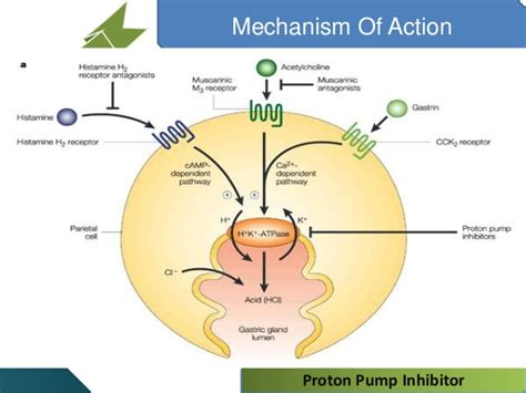 Proton Pumps by Proton Inhibitor