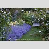 Blue Yarrow Flower | 736 x 491 jpeg 107kB